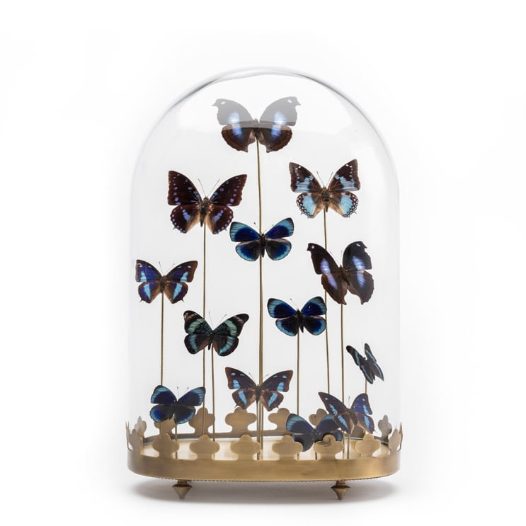 Butterflies In Glass Dome Display Case