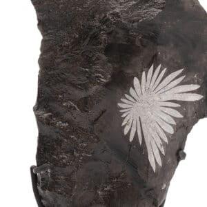 Chrysantemum Stone