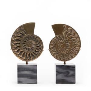 Ammonite Brass & Marble Objec